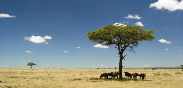 Kenia-blog
